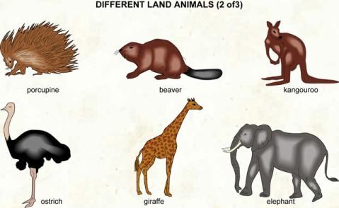 Cartoons & Animals - Classic Quiz